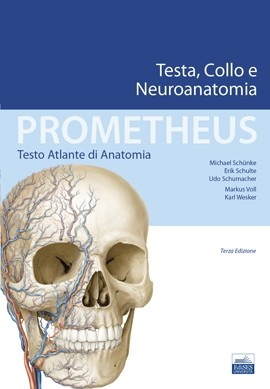Prometheus - Testa, Collo e Neuroanatomia
